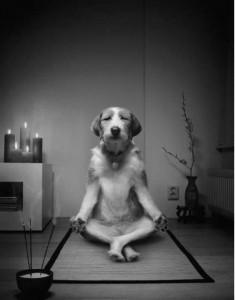 zen_dog (1)